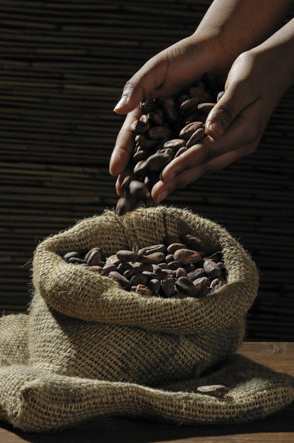 Foto van cacaobonen